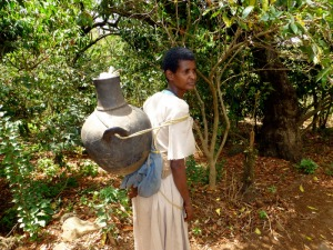 A woman transporting water